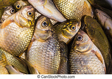 background of small fish caught in the river crucian carp