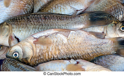 crucian - background of small fish caught in the river...