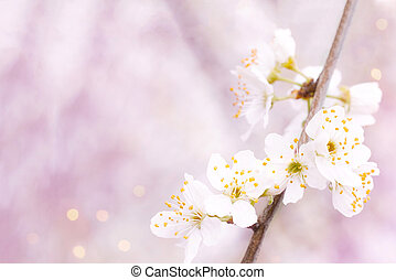 Background of spring blooming on a Sunny day. Beautiful nature scene with cherry tree in bloom and solar flares. Spring flowers in a beautiful garden. Copy space