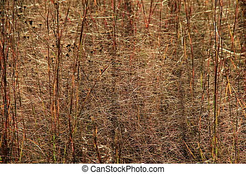 Background of tall brown grass