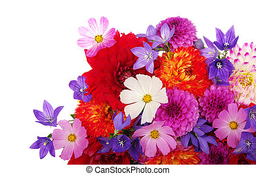 flowers - Background of the beautiful flowers