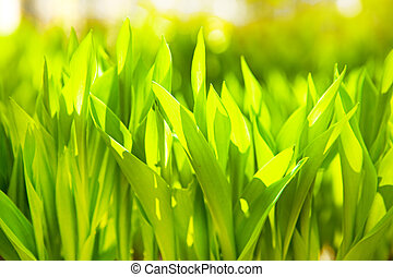 background of the green grass