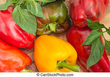 Background of the varicolored bell peppers with leaves