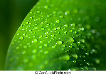 background of the water drops on a green leaf