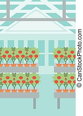 Background of tomatoes in the greenhouse.