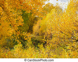 Background of trees and shrubs branches with autumn leaves