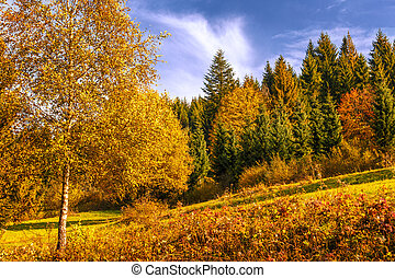 Background of trees at the edge of a forest in autumn colors.