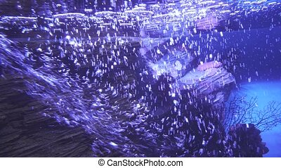 Background of underwater air bubbles in water of the sea aquarium stock footage video