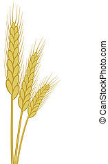 wheat ears - background of vector wheat ears
