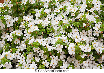 Background of white flowers
