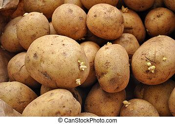 Background of Whole Fresh Potatoes