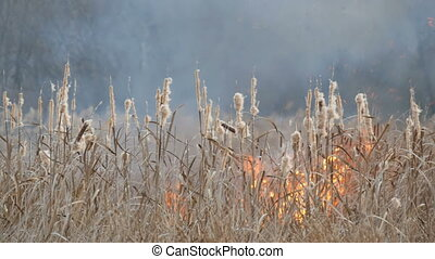 Background of wildfires or storm fire in the forest steppe....