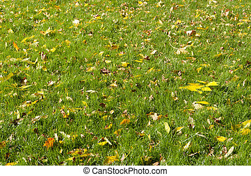 background of yellow leaves on the grass in autumn
