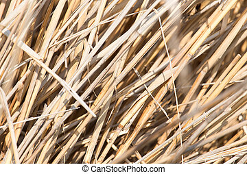 background of yellow reeds in nature