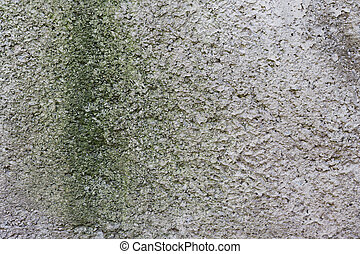 background old concrete wall with green mold