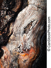 detail of old deformed wood
