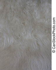 Background or texture of warm, soft, white wool