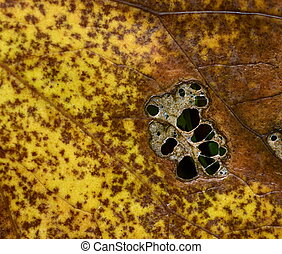 yellowish brown dying tree leaf - background or texture...
