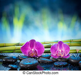 Background orchids stone and bamboo