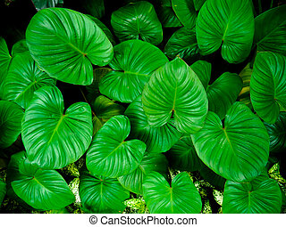 Background pattern of tropical dark green leaves, nature background concept.