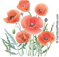 Background with red poppy. Red flower and leaves. Vector illustration