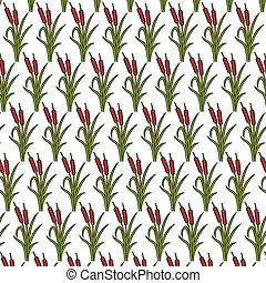 background pattern with reeds vector illustration (bulrushes...