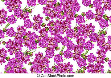 Background peony flowers