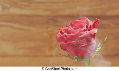 Background: red rose on a wooden background in the smoke.