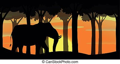 Background scene with silhouette elephant in forest