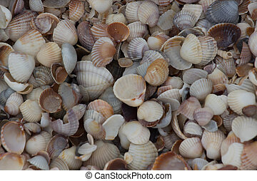 Background Shell beach - Nature Background Shell ath sea...