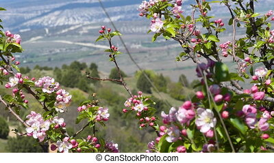 Background Spring Flowering - This stock video shows a...