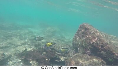 Background Stranded underwater world with corals and striped...