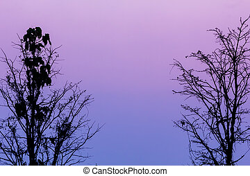 Background sunset with silhouettes of trees used as illustrations
