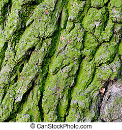 texture bark - background texture bark