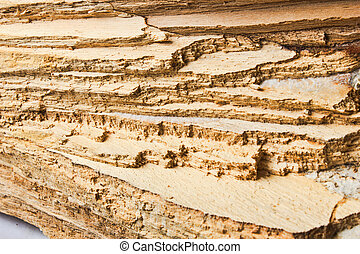 background texture of the wood