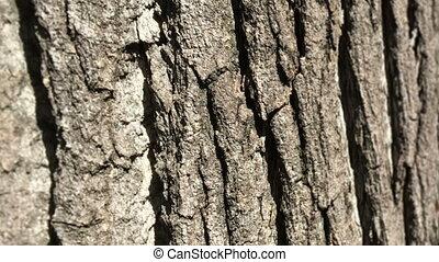 Background Texture Of Tree Bark