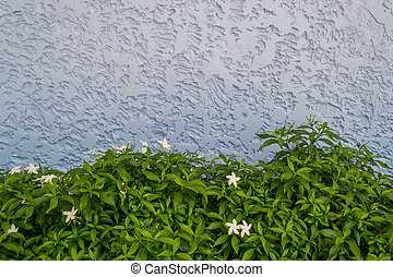 Pattern Green Plant Wall Texture And Background Pattern Of Green