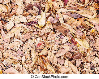 brown autumn dry leaves on the ground.
