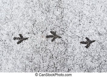 background. thawing ice on asphalt. traces of a bird.