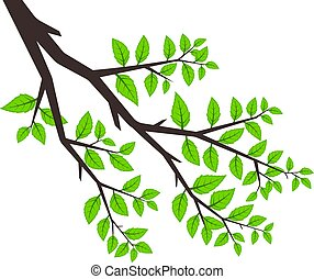 Background tree branches, tree branch with green leaves on white background