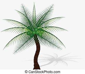 background-vector, 木, 隔離された, コレクション, plam, 白