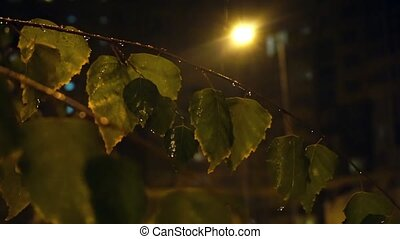 Background video - Snow falling through green foliage with streetlight beams at night