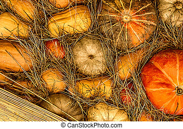 background vintage ranch wall of pumpkins orange and straw decor festival autumn vegetables