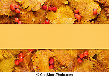 Background with autumn leaves and berries