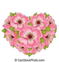 Background with beautiful  poppy