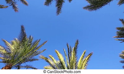 background with blue sky and palm leaves