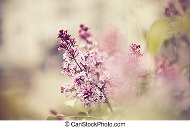 Background with branches of the blossoming lilac