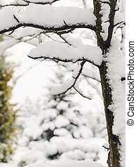 background with branches under snow in winter