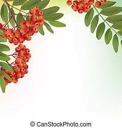 Background with bunch of rowan. Contains transparent...