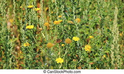 Background with camomile